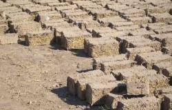 """Photo of """"البترول"""": مشروع جديد لإنتاج ألواح خشبية من قش الأرز"""