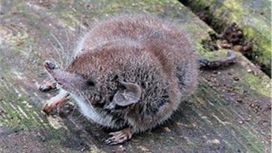 Photo of اكتشاف نوعين جديدين من الثدييات في موقع للتراث العالمي شرقي الصين
