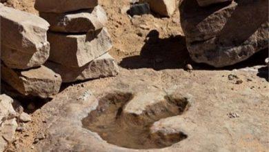 Photo of اكتشاف آثار أقدام ديناصورات عمرها 80 مليون عام جنوب شرقي الصين