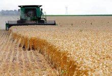 Photo of حصاد 28 ألفا و800 فدان من القمح بدمياط